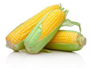 kukurice_272176445